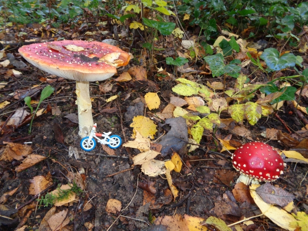 Paddenstoelen in de groene long